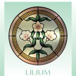 Lilium 900